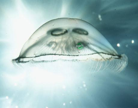 Jellyfish speaks out against climate change